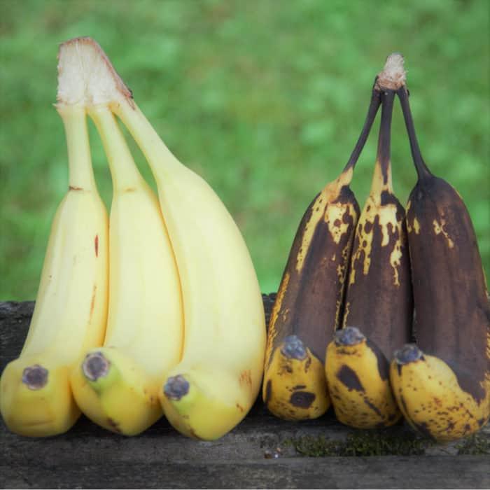 Fresh ripe bananas next to over ripe soft bananas perfect for baking